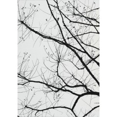 Branches 4