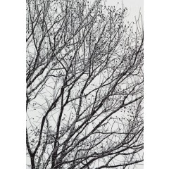 Branches 5