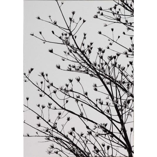 New Leaves 8