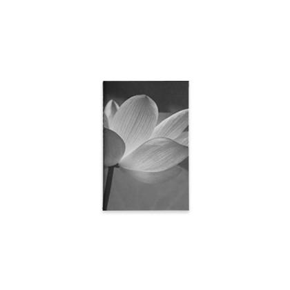 Lotus 6.