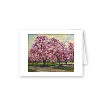 Sakura in Philadelphia