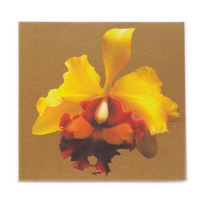 Cattleya in Gold 1