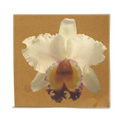 Cattleya in Gold 4