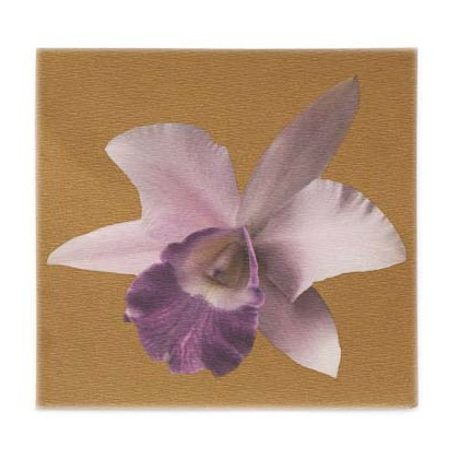 Cattleya in Gold 5