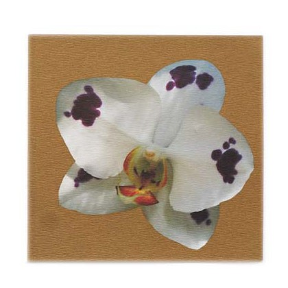 Phalaenopsis in Gold