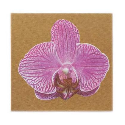 Phalaenopsiss in Gold 2