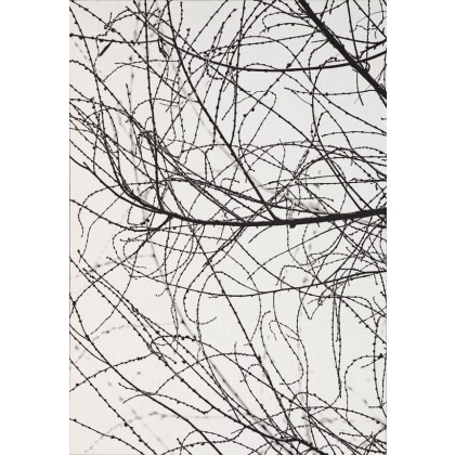 Nature Lines 9
